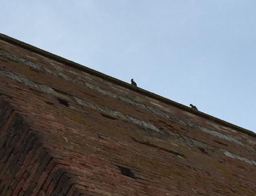 Siena Walls