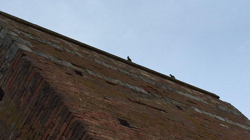Rilievo Laser scanner delle mura di Siena