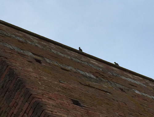 Remparts de Sienne